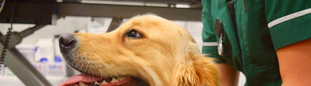 Neutering your dog | Davison Veterinary Care